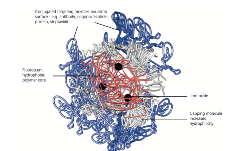 CPN-Streambio-nanoparticles