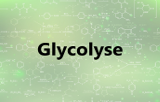 Kits de dosage - Glycolyse