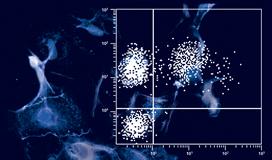 Agrégats dans les cultures de cellules - La solution est ici !