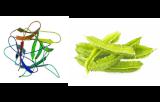 Lectine Psophocarpus tetragonolobus (PTL/PTA II)