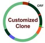 Service à façon : Modification de clone