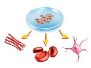 Service à façon : Obtention de cellules primaires