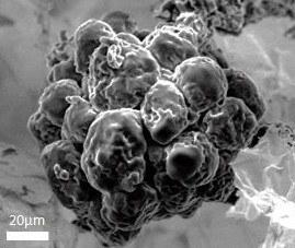 Support de culture 3D pour les adipocytes