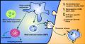 Outils pour la recherche sur les exosomes