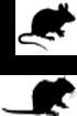 Multi-espèces