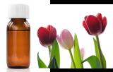 Lectine Tulipa gesneriana (TxLC-I)